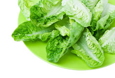 Free Romaine Lettuce Royalty Free Stock Photography - 22661957
