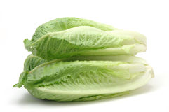 Romaine lettuce. In isolated white background Stock Photo
