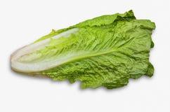 Romaine Lettuce. Bunch of romaine lettuce isolated on white Stock Image