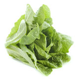 Romaine lettuce. In front of white background Stock Photos