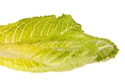 Romaine lettuce Stock Photography