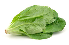 Romaine lettuce. Close up of a romaine lettuce in isolated white background Stock Images