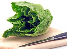 Romaine Lettuce. Freash green romaine lettuce cutting board and knife royalty free stock images