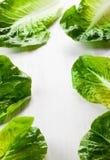 Romaine Lettuce images stock