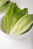 Romaine Lettuce Fotografie Stock Libere da Diritti