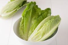 Romaine Lettuce Fotografie Stock
