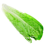 Romaine lettuce Stock Photos