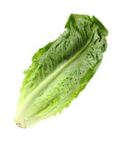 Romaine Lettuce Angle. A stalk of romaine lettuce at an angle Royalty Free Stock Image