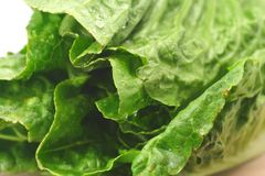 Romaine Lettuce Close_up. Freash green romaine lettuce close-up of leaves stock photo