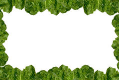 Romaine lettuce frame Royalty Free Stock Photography