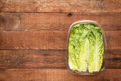 Romaine lettuce heart leaves Royalty Free Stock Photos