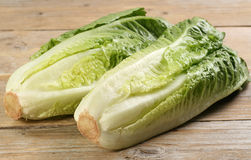 Romaine lettuce hearts Stock Photography