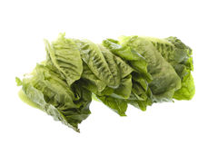 Romaine Lettuce Isolated Stock Photography