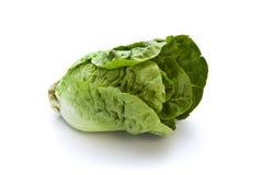 Romaine lettuce isolated Stock Photos