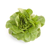 Romaine Lettuce isolated. On white background Stock Photo