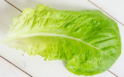 Romaine lettuce leaf Royalty Free Stock Image