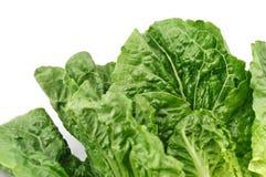 Romaine Lettuce Leaf. Fresh green romaine lettuce ready cut for salad stock images