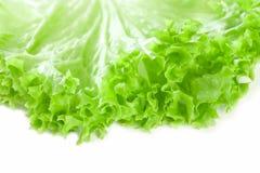 Romaine lettuce leaf, on white Stock Photos