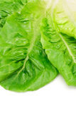 Romaine lettuce leaves Royalty Free Stock Images