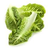 Romaine Lettuce Leaves. Romaine or cos lettuce leaves,  on white Royalty Free Stock Image