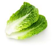Romaine Lettuce Leaves Isolated sur le fond blanc image libre de droits