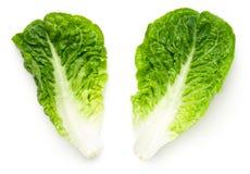 Romaine Lettuce Leaves Isolated sur le fond blanc photo libre de droits