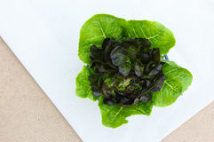 Romaine Lettuce and Purple Lettuce Royalty Free Stock Images