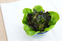 Romaine Lettuce and Purple Lettuce in Glass Stock Photos