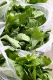 Romaine lettuce. Several bags of plastic bagged lettuce Stock Image