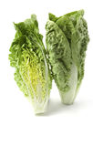 Romaine lettuce Royalty Free Stock Images
