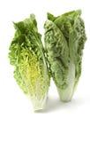 Romaine lettuce. On white backgraund Royalty Free Stock Images