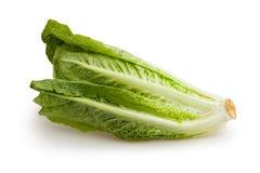 Romaine lettuce. On white background Stock Image