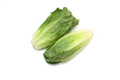 Romaine lettuce in a white background Stock Photos