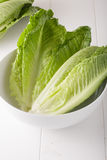 Romaine lettuce Royalty Free Stock Photos