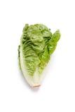 Romaine salad Stock Photo