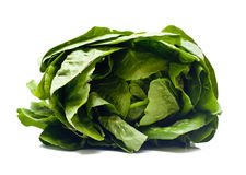 Romaine Salad Stock Photography