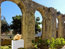 Roman Aqueduct e jardim Foto de Stock Royalty Free