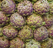 Roman Artichokes Stock Photography