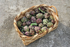 Roman artichokes in woven basket Royalty Free Stock Image