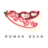 Roman Bean Pod, Infographic Illustration With Realistic Pod-Bearing Legumes Plant And Its Name Stock Photos