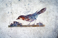 Roman bird Royalty Free Stock Photography