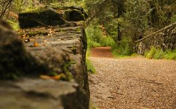 Stone bridge in the autumn forest royalty free stock photography