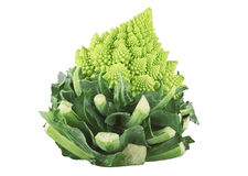Roman broccoli Stock Photography
