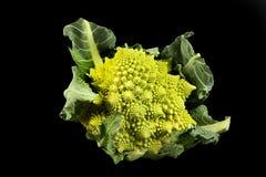 Roman cabbage Stock Photos