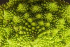 Roman cabbage Stock Photo