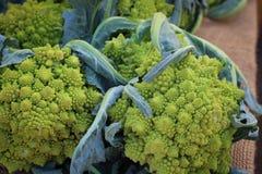 Roman Cauliflower Royalty Free Stock Photography