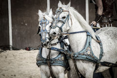 Roman chariot in a fight of gladiators, bloody circus. Show Royalty Free Stock Image