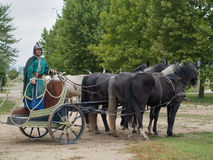 Roman chariot. Horse drawn carriage show in the park stock photos