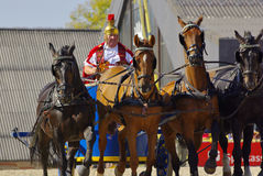 Roman chariot racing, Marbach Stallion Parade Stock Image