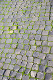 Roman cobblestones and green moss Stock Images